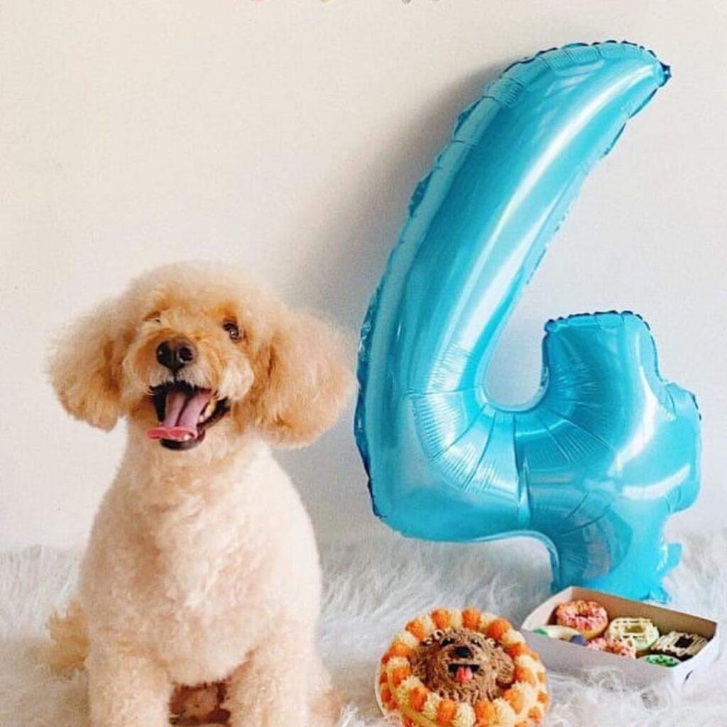 dog birthday with number 4 balloon from Barkin Blends