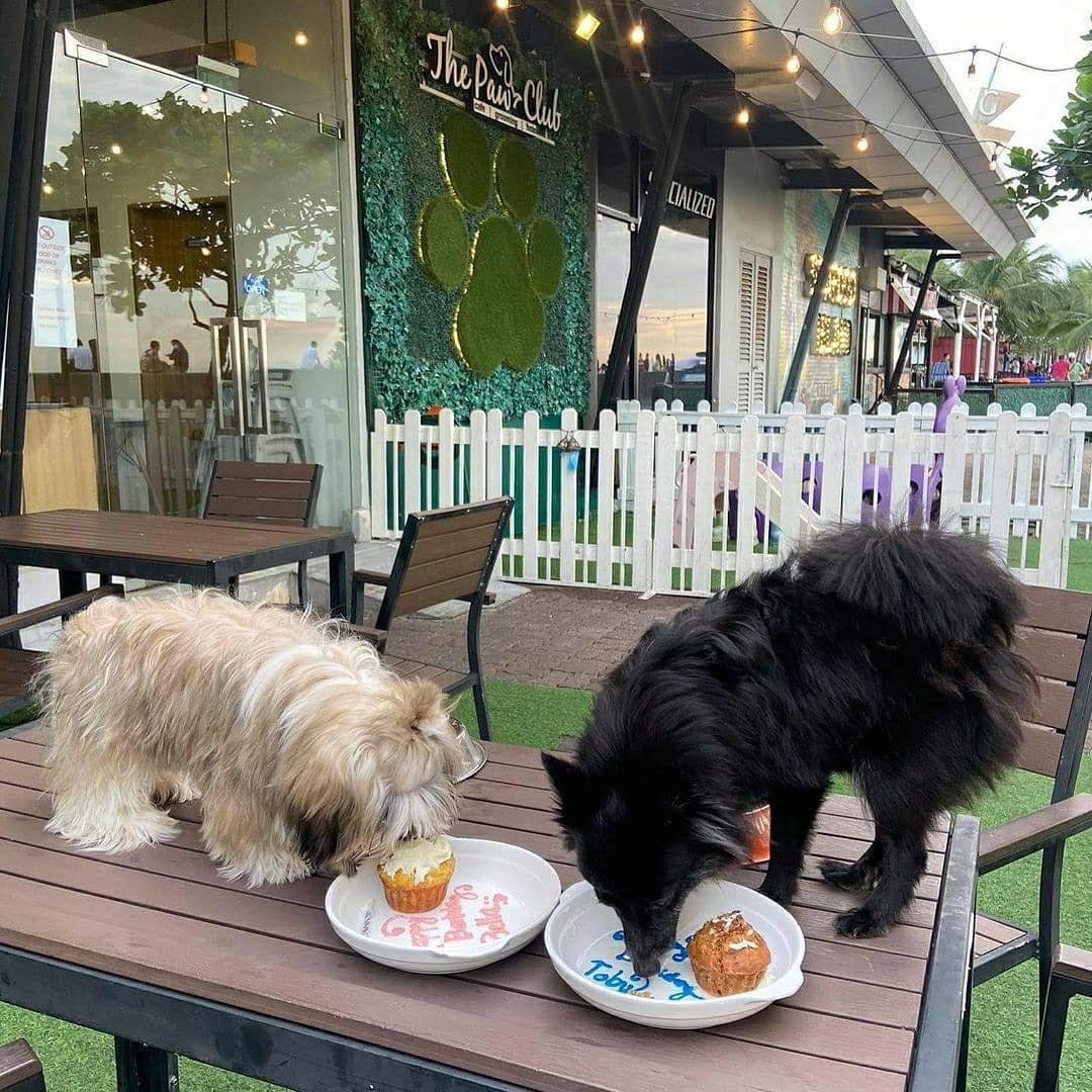 dogs eating on the table at The Paw Club
