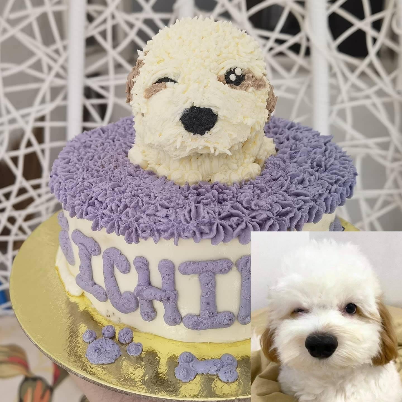 Dog cake photo by Pawty Bakery
